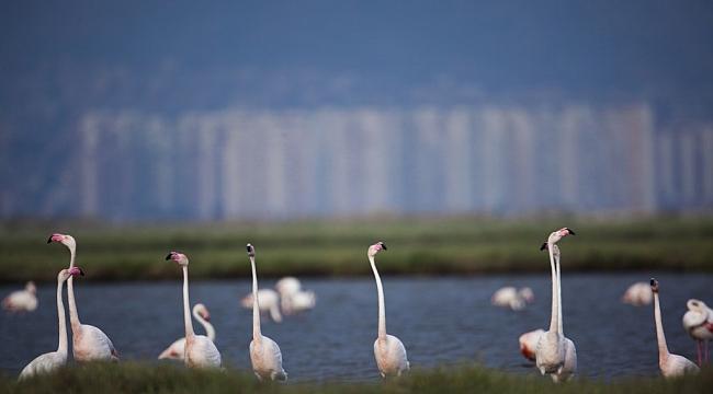 Gediz Deltası'nın Doğa mirası ilan edilmesi için imza kampanyası