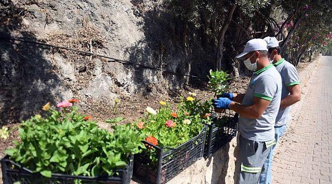 Turizm merkezi Ölüdeniz'de peyzaj çalışması