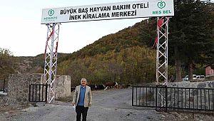 Türkiye'nin ilk ve tek hayvan bakım oteli